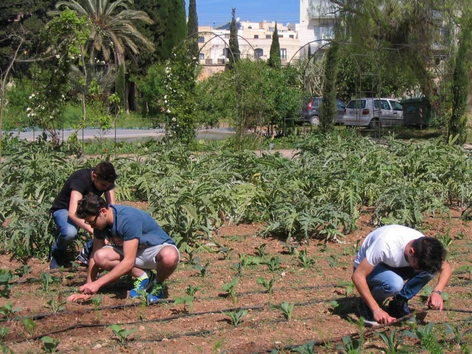 Agrostart 1
